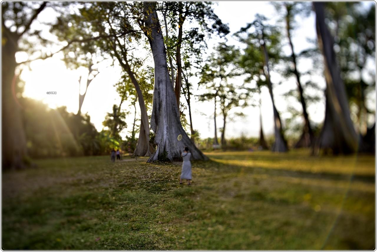 Big Tree Sambelia