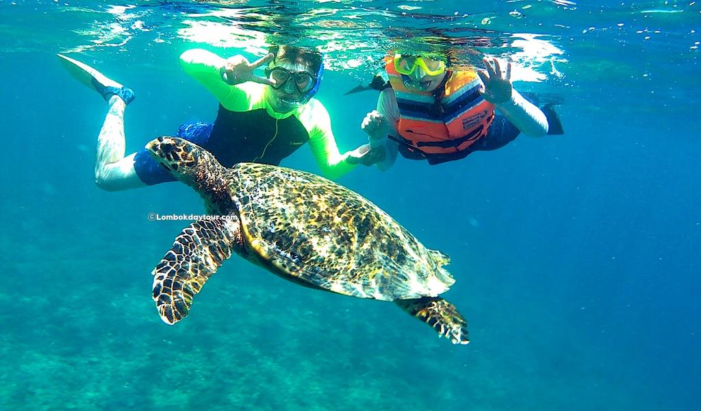 gili turtle